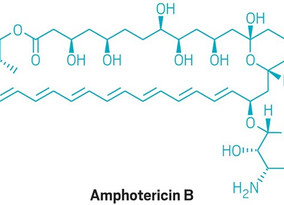 Amphotericin B improves cystic fibrosis symptoms in cultured cells and pigs Antifungal drug forms io