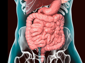 Creating Intestinal Organoids In Vitro