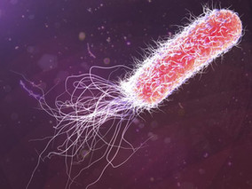 Chronic P. Aeruginosa Infection Greatly Raises Risk of Flares in Non-CF Bronchiectasis, Study Shows