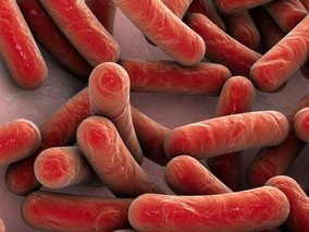 Poor Oxygen Conditions May Promote P. aeruginosa Infection Over Other Pathogen in CF, Study Suggests