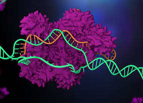 New Tool for Rapidly Analyzing CRISPR Edits Reveals Frequent Production of Unintended Edits