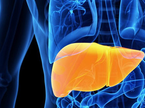 Ultrasound Predicts Advanced Liver Disease in CF Patients, According to Clinical Trial Data