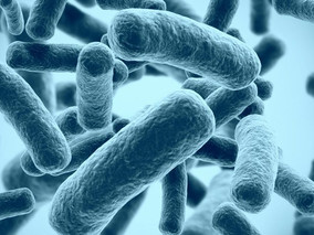 Avycaz May Be Effective for Multidrug-resistant P. aeruginosa Infections in CF Patients, Study Sugge
