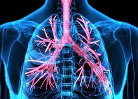 Brensocatib prolongs time to first pulmonary exacerbation in patients with bronchiectasis
