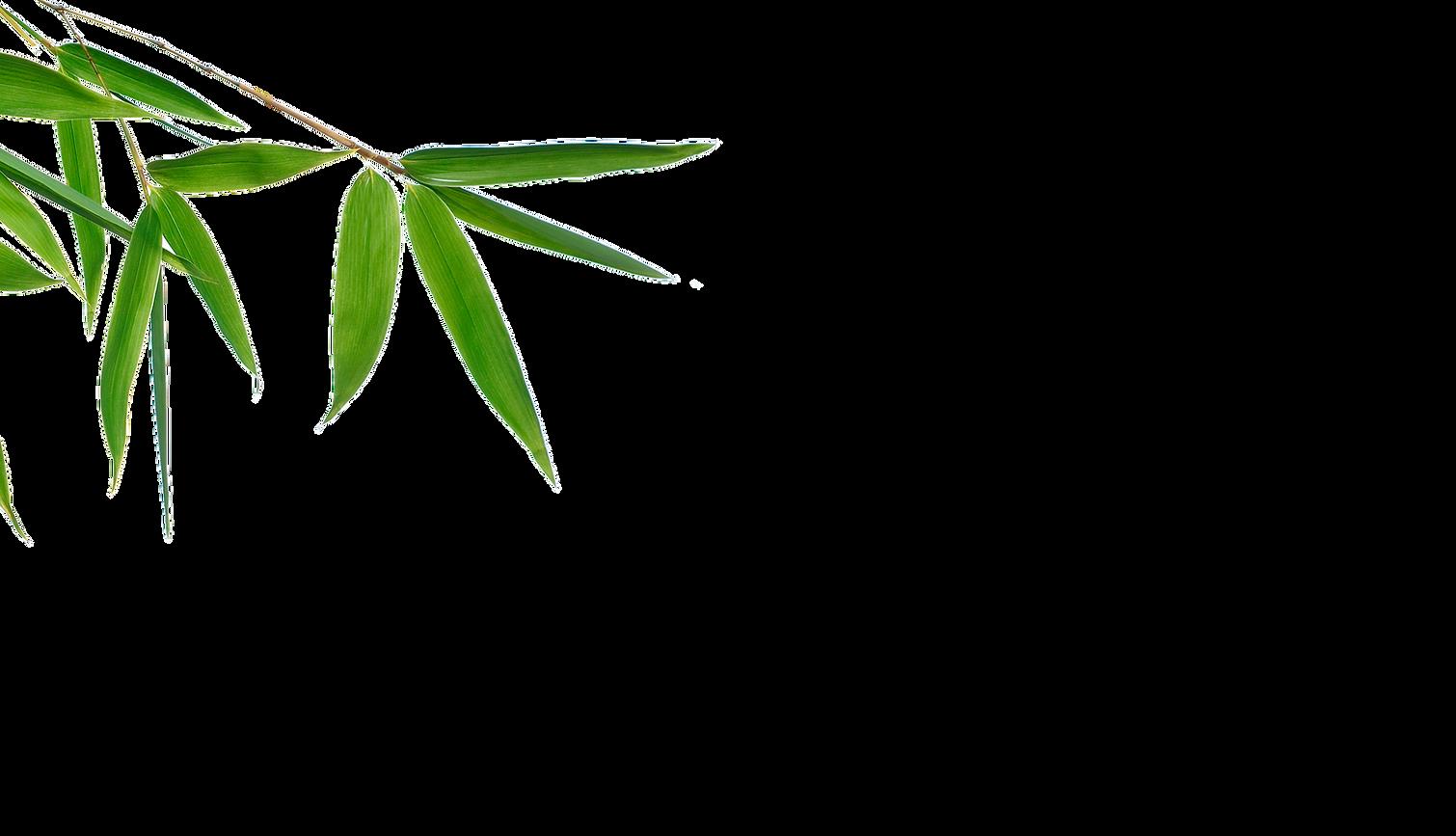 bamboo_2.png
