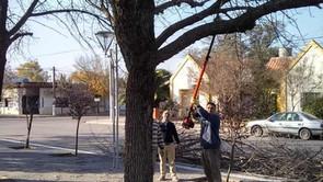 Mayo, mes de poda de árboles en Winifreda