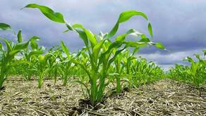 Perspectivas Climatológicas y Productivas para la siembra gruesa