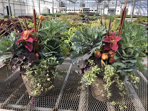 "17"" Fall planter"
