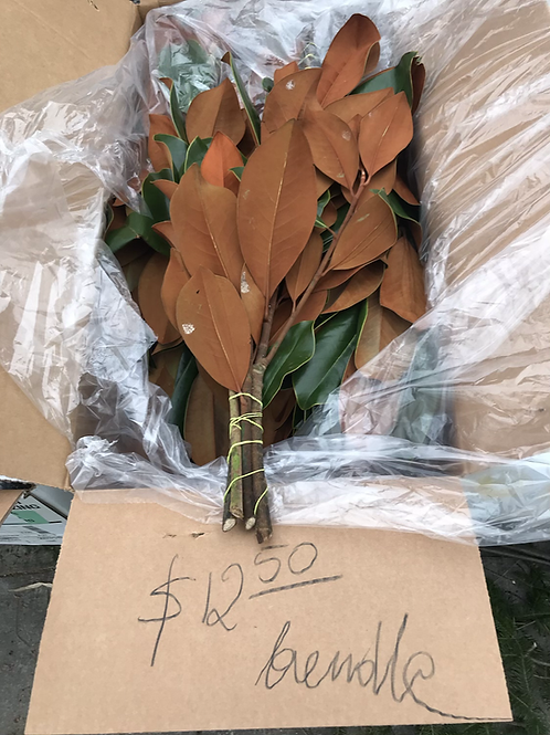 Magnolia branches ( price per bundle)