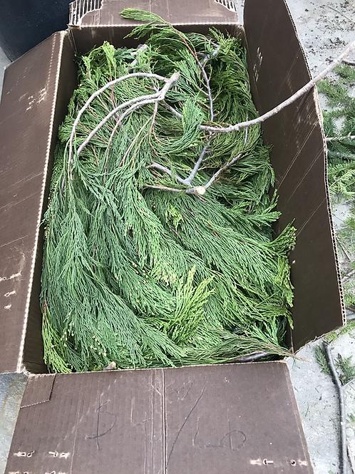 Incense Cedar (price per lb)