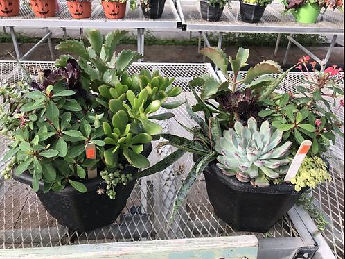 Succulent combo planter