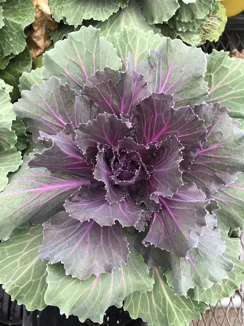 1gal. Kale#11