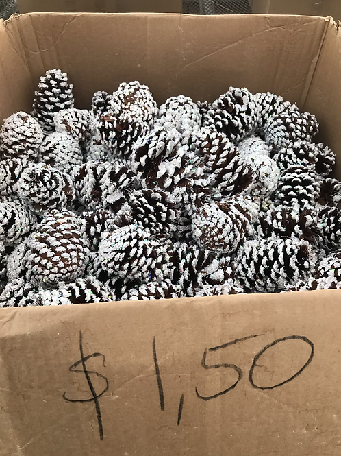Large pinecones white glittered