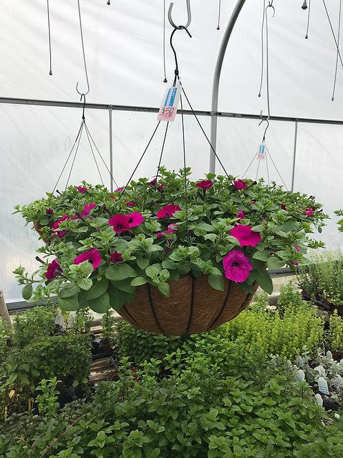"""20"""" coco basket  of petunias"""