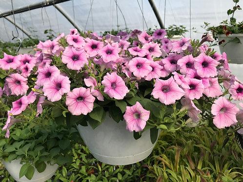 """12"""" Petunia Hanging Basket"""
