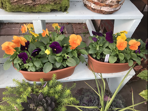 Fall planter with pansies