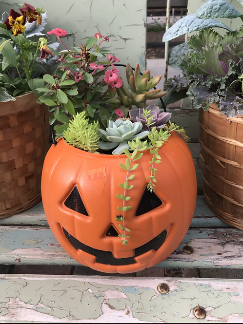 Plastic pumpkin with succulents
