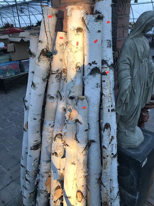 5-6' birch logs