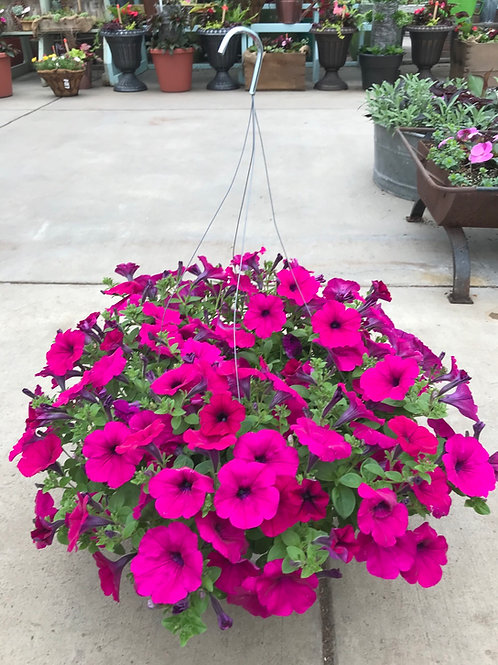 "12"" Purple Wave petunia basket"
