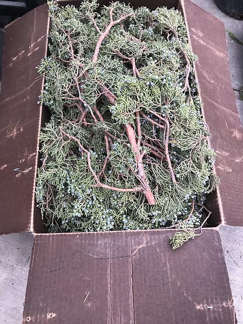 Juniper with berries (price per lb)