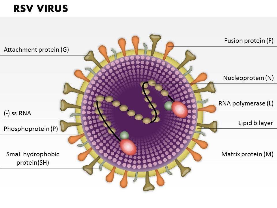 RSV Virus