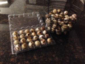 quail eggs1.JPG