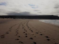 The 4 tracks 2016 Royal National Park