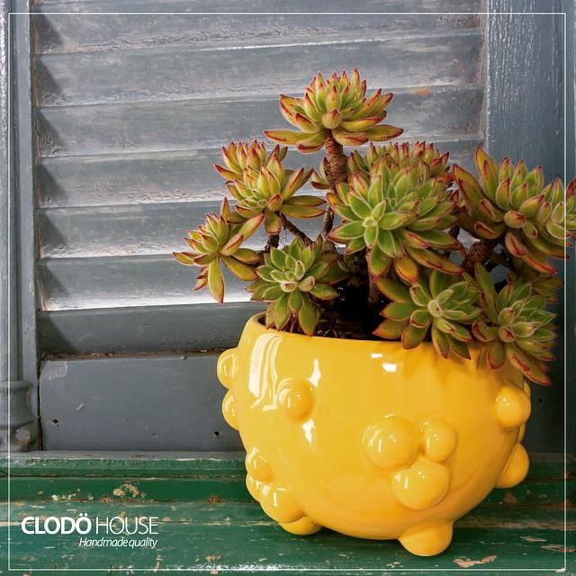 Macetas en todos los colores!! Encontralas próximamente en nuestro showroom ! #buenosaires #argentin