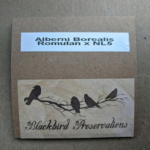 Alberni Borealis