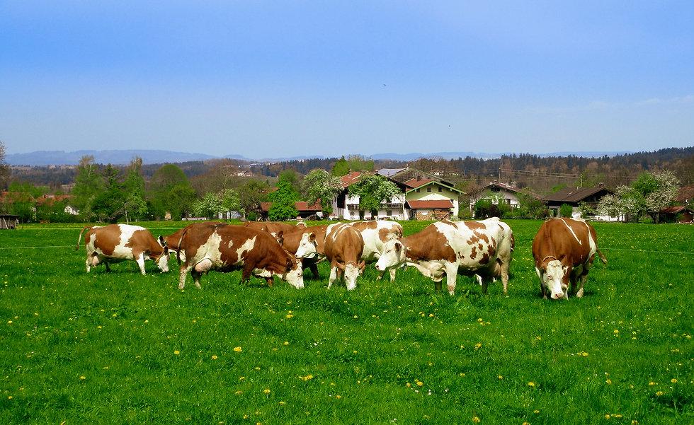 BioBergen Rindfleisch Chiemgau.jpg