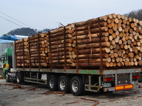 韓国向けに桧原木を出荷しました。