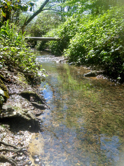 grounds stream