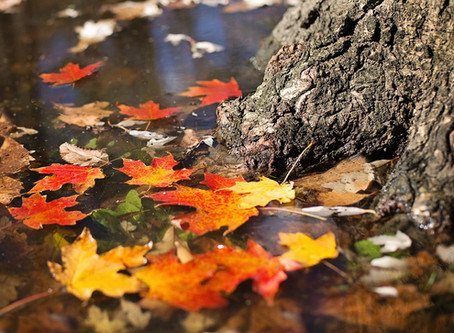 Autumn Equinox: A Time for Balance and New Beginnings