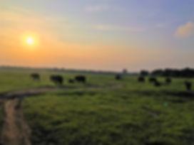 Elephant sunset.JPG