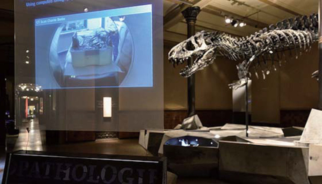 Proyecciones en-Museo-Historia-Natural-Berlin-05