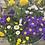 Thumbnail: terrasplanten