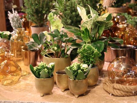 Goudkleurige kerst.... alles in voorraad. De winkel is open voor bloemen, planten en bestellingen.