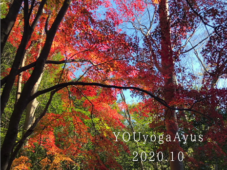 YOUyoga Ayus 10月の予定