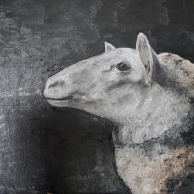 Schaf - einfach nur Schaf