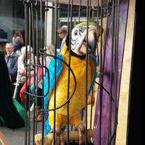 Blackbeard's Parrot Tells All