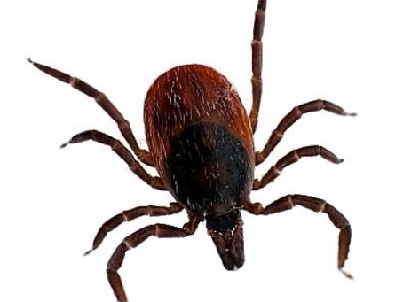 How to treat your pets and stock for ticks