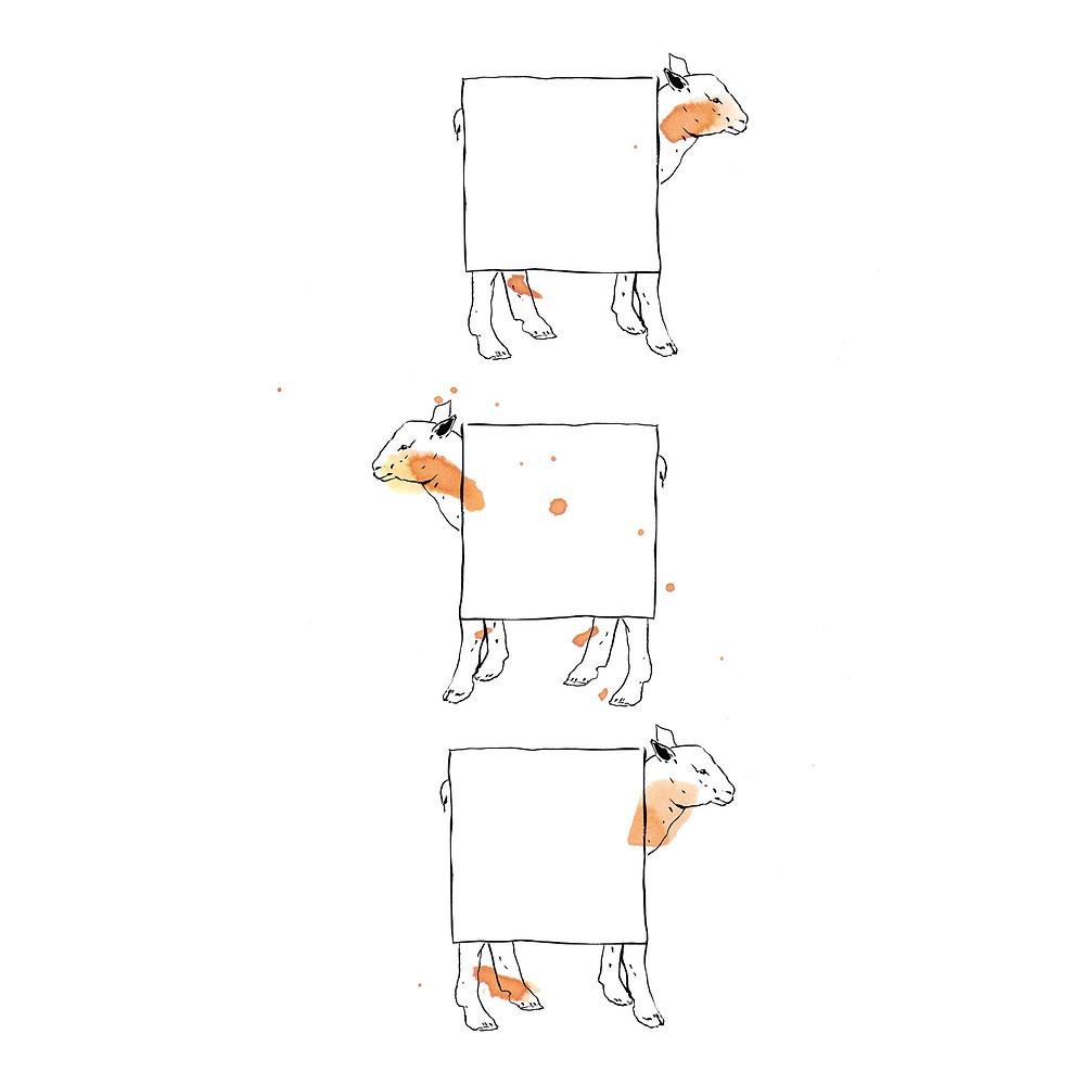 Carrés d'agneau ©Aurélie Sartres