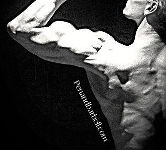 Daniel Schou, shoulders, biceps peak, lats, rhomboideus, chiseled physique
