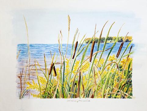 Cattails on Lake Oneida