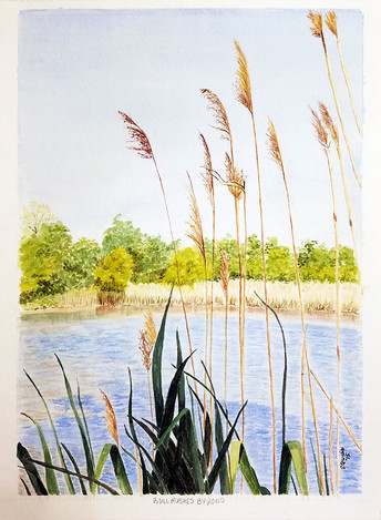 Bull Rushes by Pond
