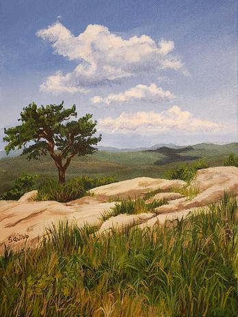 Perkins Pine
