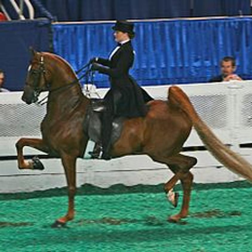 Saddle Seat Clinic - Dexter Equestrian Team