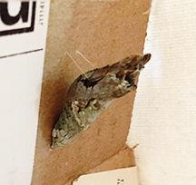 swallowtailcocoonwebs.jpg