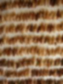 cecropcocoonwebs.jpg