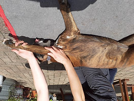 dog stretch